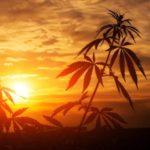 <b>5 Acciones de Cannabis Se Dispararán, Según Los Mejores Analistas De Wall Street</b>